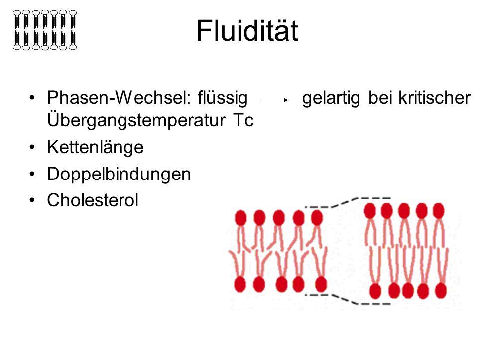 Fluidität Phasen-Wechsel: flüssig gelartig bei kritischer Übergangstemperatur Tc Kettenlänge Doppelbindungen Cholesterol