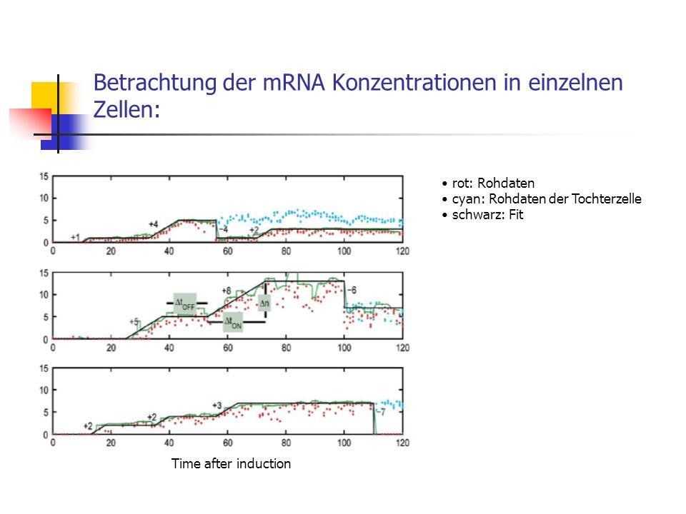 Betrachtung der mRNA Konzentrationen in einzelnen Zellen: Time after induction rot: Rohdaten cyan: Rohdaten der Tochterzelle schwarz: Fit
