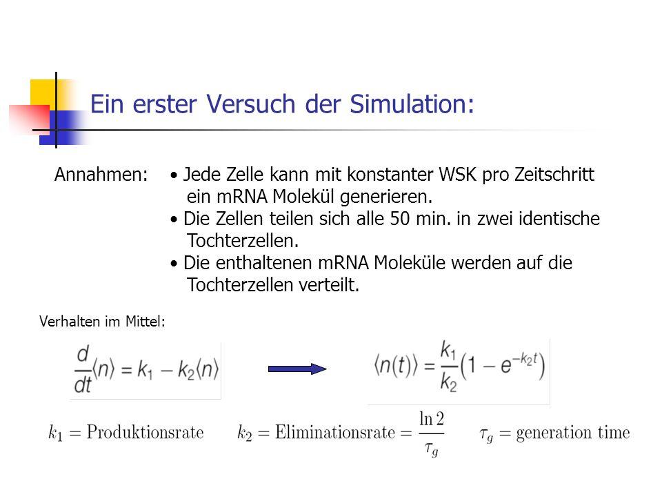 Ein erster Versuch der Simulation: Annahmen: Jede Zelle kann mit konstanter WSK pro Zeitschritt ein mRNA Molekül generieren. Die Zellen teilen sich al