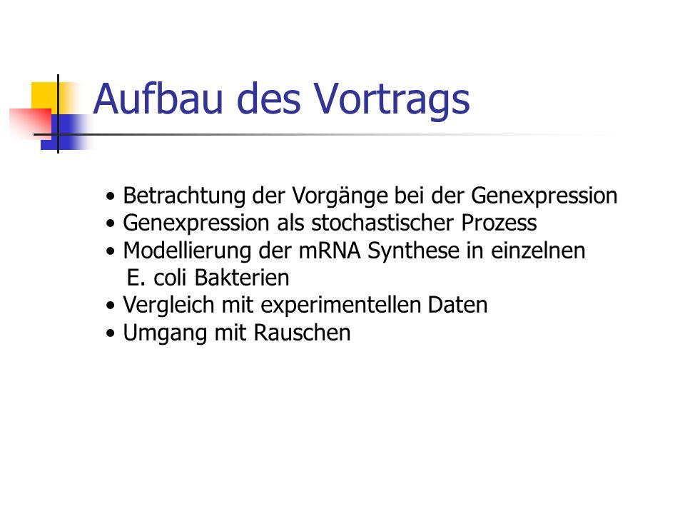 Aufbau des Vortrags Betrachtung der Vorgänge bei der Genexpression Genexpression als stochastischer Prozess Modellierung der mRNA Synthese in einzelne
