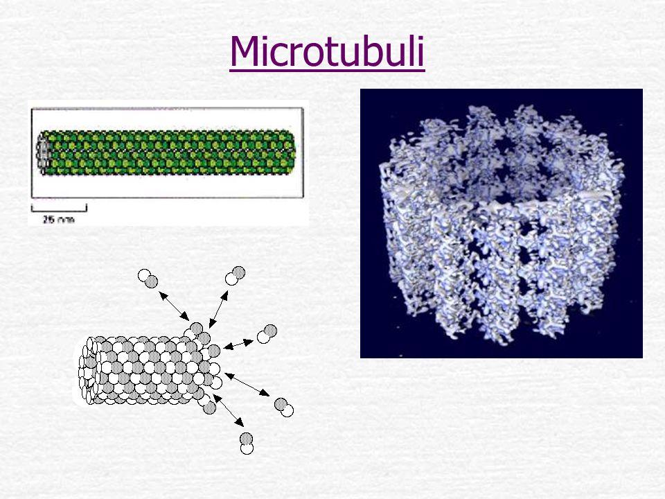 Microtubuli