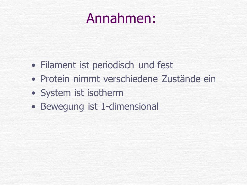 Annahmen: Filament ist periodisch und fest Protein nimmt verschiedene Zustände ein System ist isotherm Bewegung ist 1-dimensional
