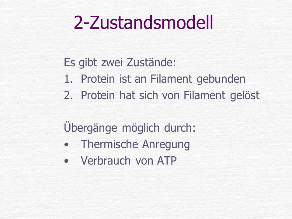 2-Zustandsmodell Es gibt zwei Zustände: 1.Protein ist an Filament gebunden 2.Protein hat sich von Filament gelöst Übergänge möglich durch: Thermische