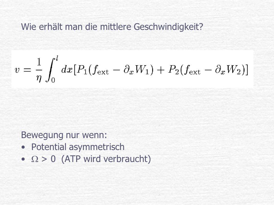 Wie erhält man die mittlere Geschwindigkeit? Bewegung nur wenn: Potential asymmetrisch > 0 (ATP wird verbraucht)