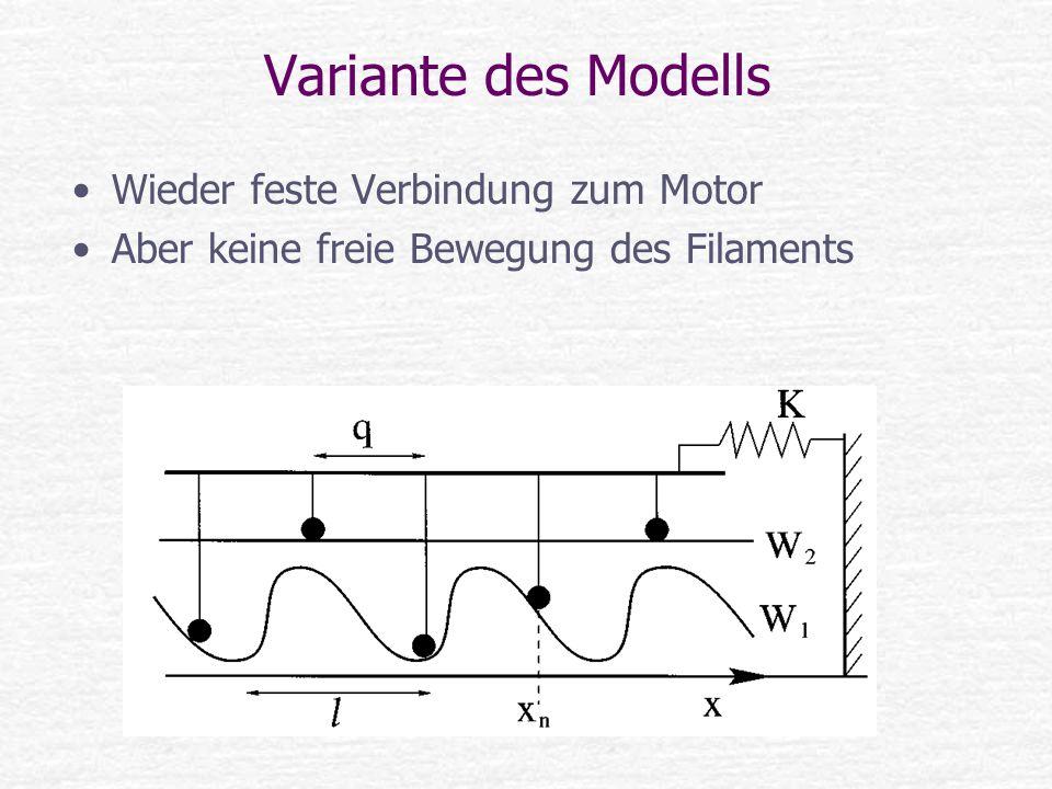 Variante des Modells Wieder feste Verbindung zum Motor Aber keine freie Bewegung des Filaments