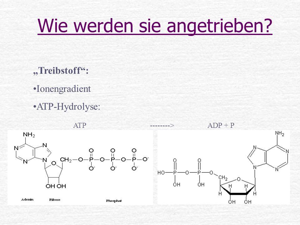 Wie werden sie angetrieben? Treibstoff: Ionengradient ATP-Hydrolyse: ATP --------> ADP + P