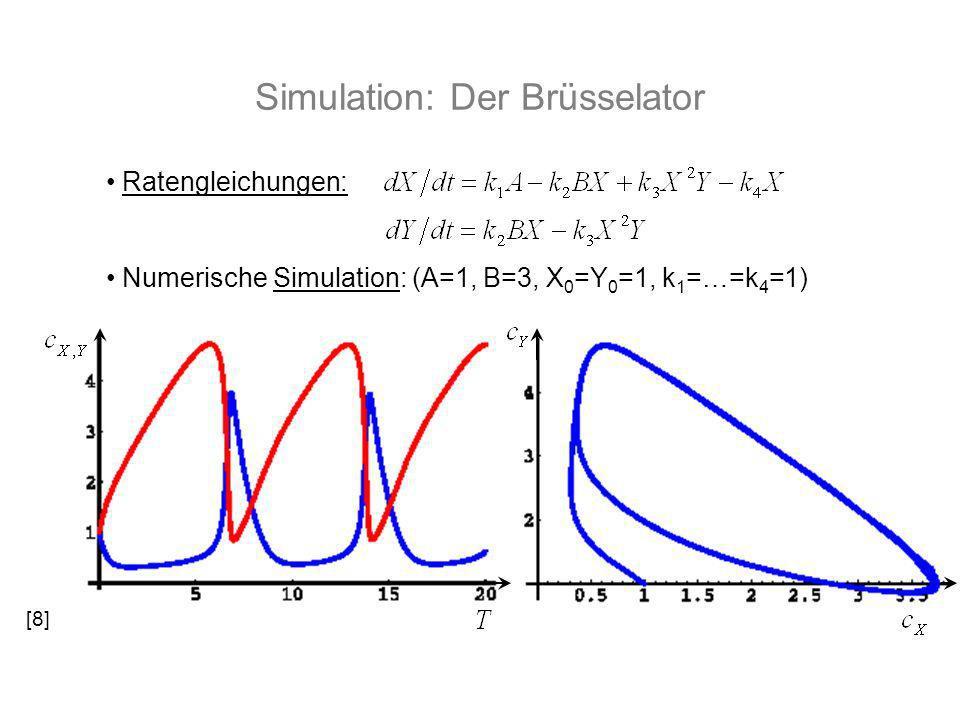 Simulation: Der Brüsselator Ratengleichungen: Numerische Simulation: (A=1, B=3, X 0 =Y 0 =1, k 1 =…=k 4 =1) [8]