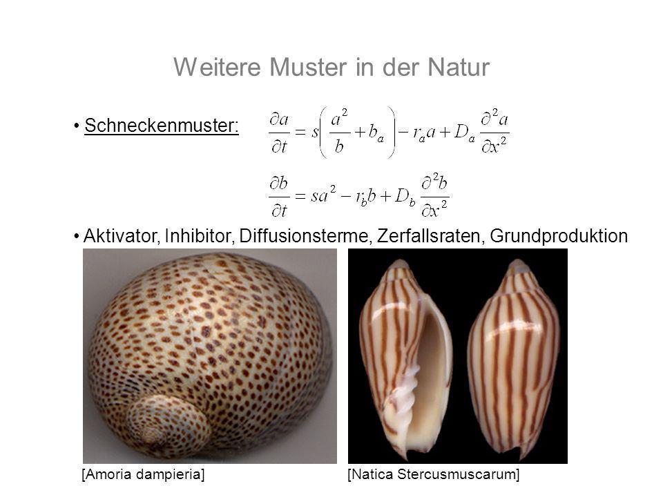 Schneckenmuster: Aktivator, Inhibitor, Diffusionsterme, Zerfallsraten, Grundproduktion [Amoria dampieria][Natica Stercusmuscarum]
