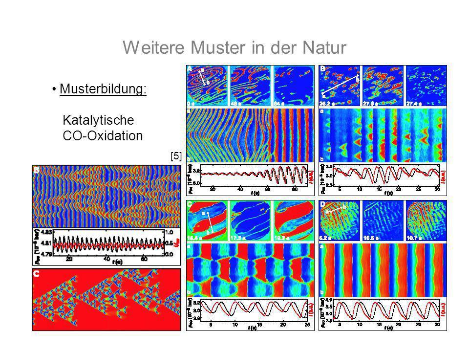 Weitere Muster in der Natur Musterbildung: Katalytische CO-Oxidation [5]