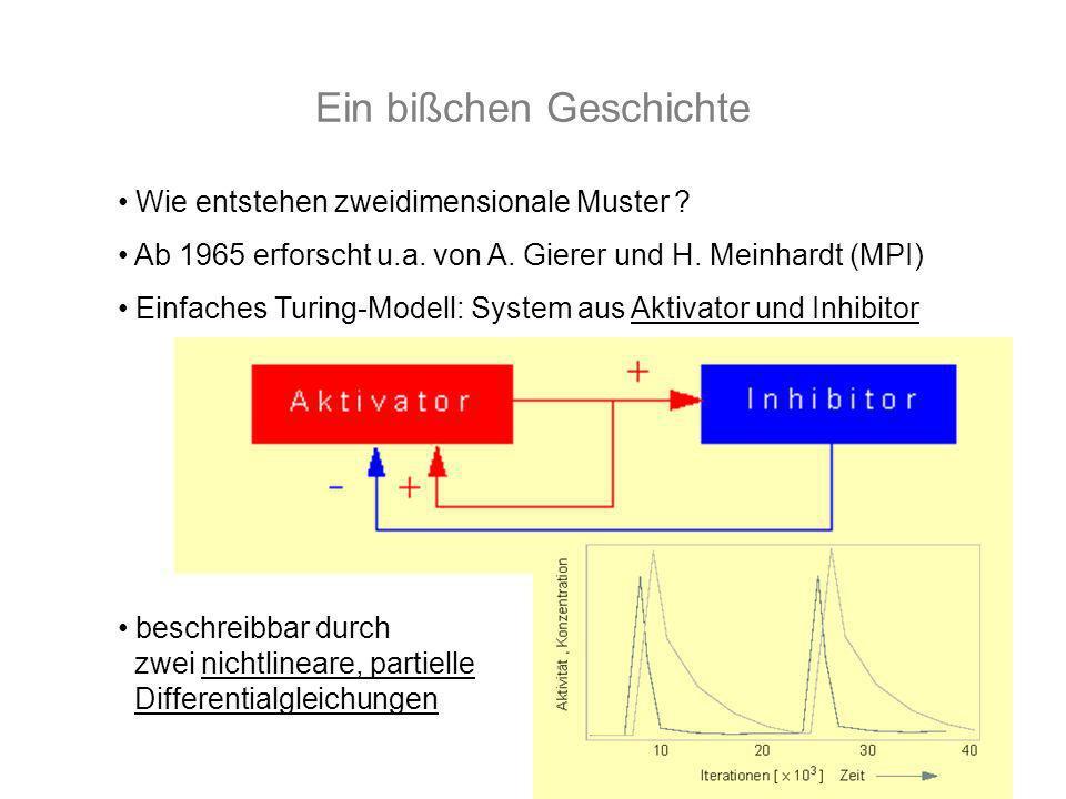 Ein bißchen Geschichte Wie entstehen zweidimensionale Muster ? Ab 1965 erforscht u.a. von A. Gierer und H. Meinhardt (MPI) Einfaches Turing-Modell: Sy