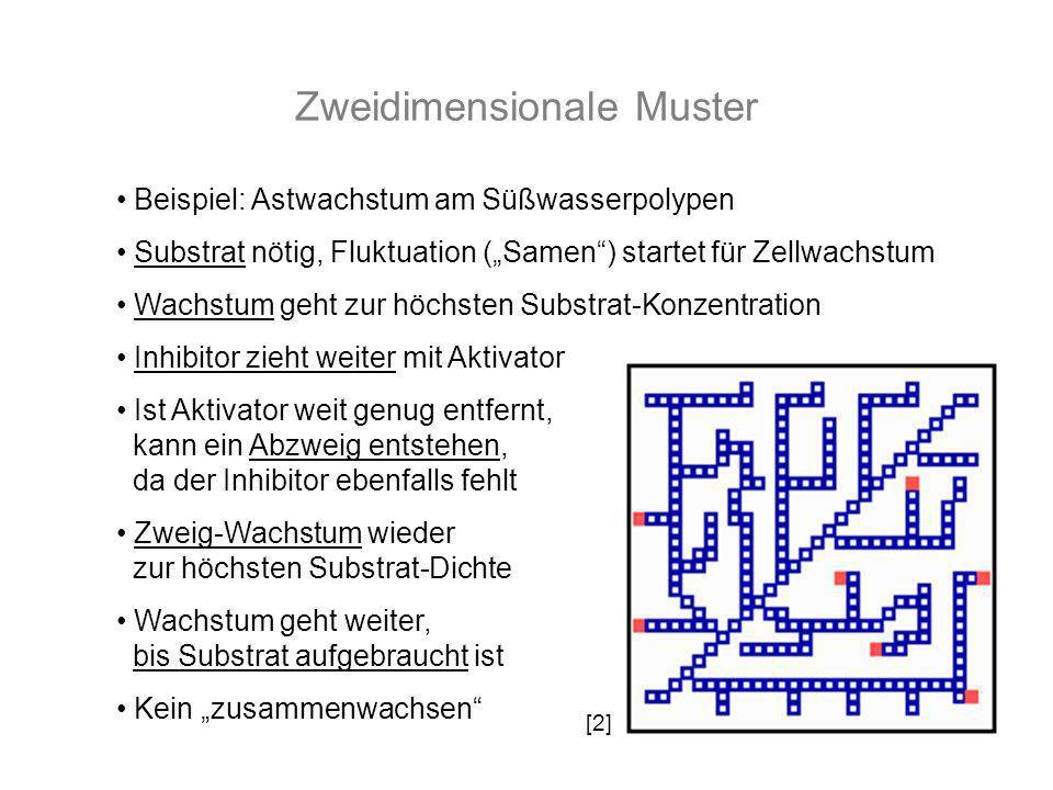 Zweidimensionale Muster Beispiel: Astwachstum am Süßwasserpolypen Substrat nötig, Fluktuation (Samen) startet für Zellwachstum Wachstum geht zur höchs