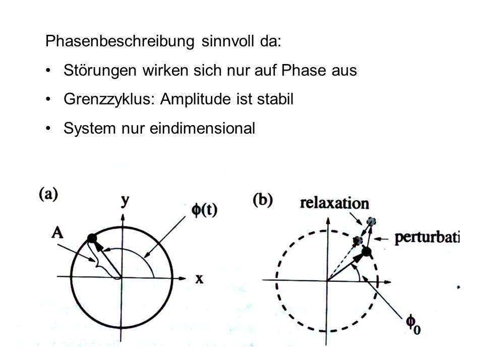 Phasenbeschreibung sinnvoll da: Störungen wirken sich nur auf Phase aus Grenzzyklus: Amplitude ist stabil System nur eindimensional