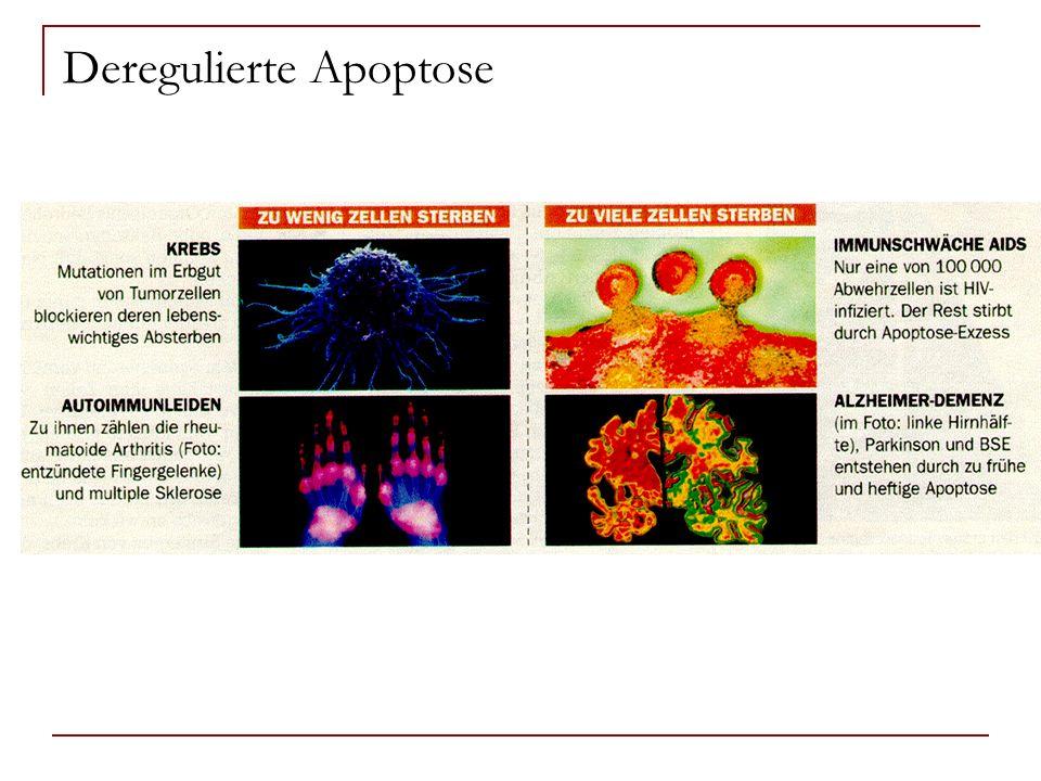 Deregulierte Apoptose