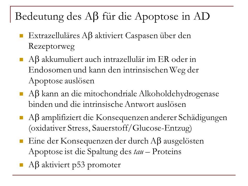 Bedeutung des A für die Apoptose in AD Extrazelluläres A aktiviert Caspasen über den Rezeptorweg A akkumuliert auch intrazellulär im ER oder in Endoso