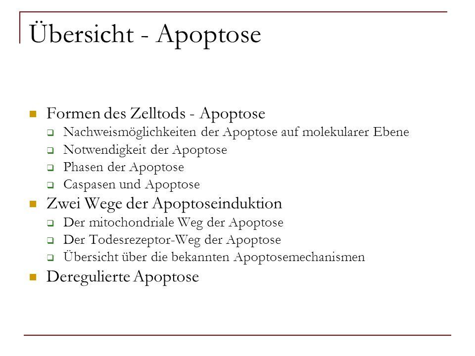 Übersicht – Alzheimer und Apoptose Apoptose und AD Bedeutung des Ab für die Apoptose in AD Bedeutung des tau – Proteins für die Apoptose in AD Caspase-Spaltung von tau führt zur Ausbildung von NFT Zusammenfassung der molekularen Vorgänge bei der Apoptose in AD