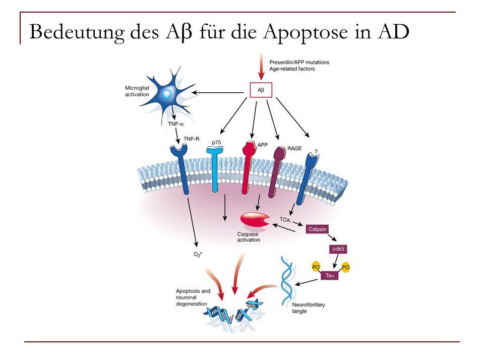 Bedeutung des A für die Apoptose in AD