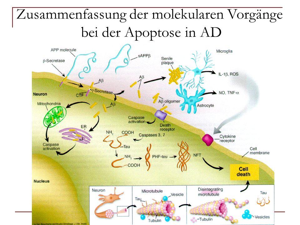 Zusammenfassung der molekularen Vorgänge bei der Apoptose in AD