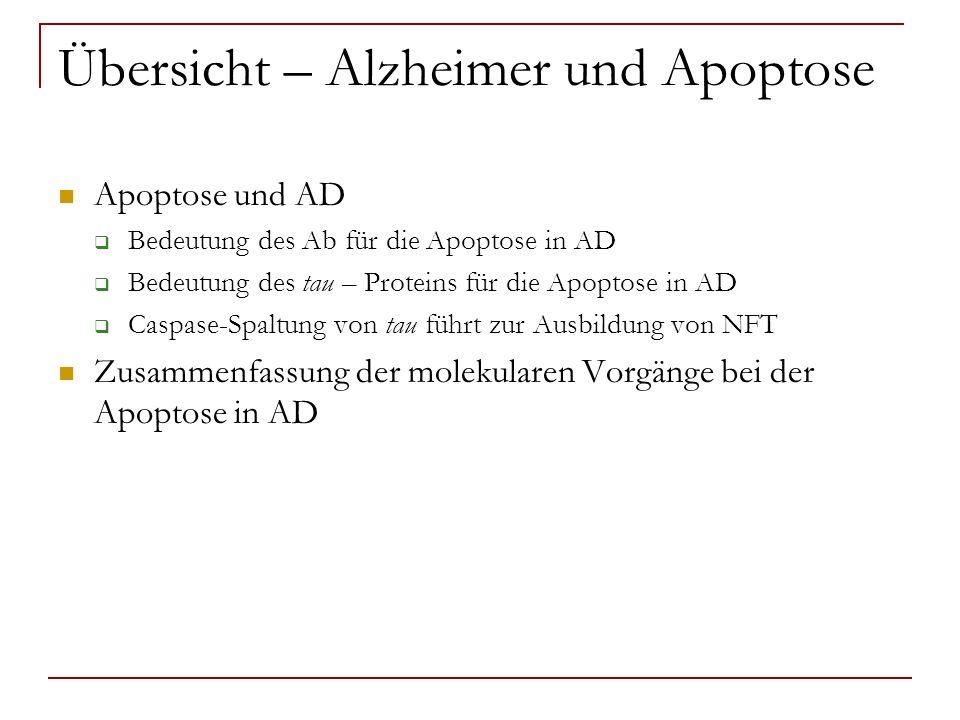 Übersicht – Alzheimer und Apoptose Apoptose und AD Bedeutung des Ab für die Apoptose in AD Bedeutung des tau – Proteins für die Apoptose in AD Caspase