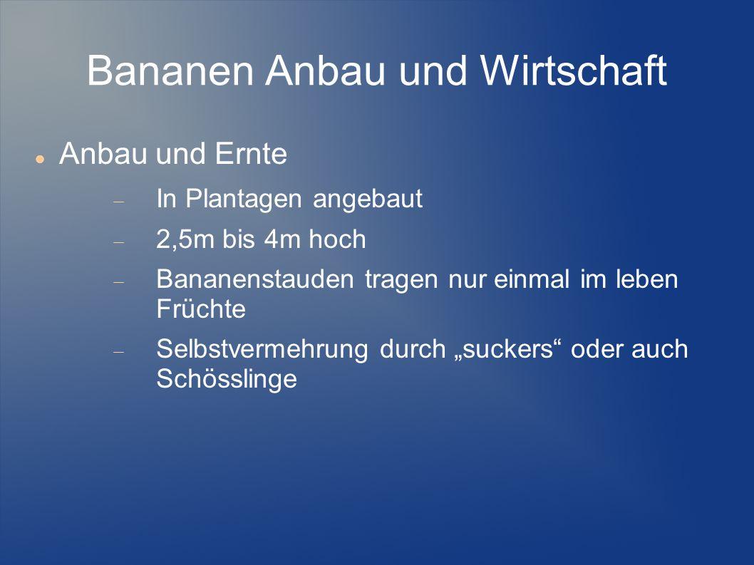 Bananen Anbau und Wirtschaft Anbau und Ernte In Plantagen angebaut 2,5m bis 4m hoch Bananenstauden tragen nur einmal im leben Früchte Selbstvermehrung