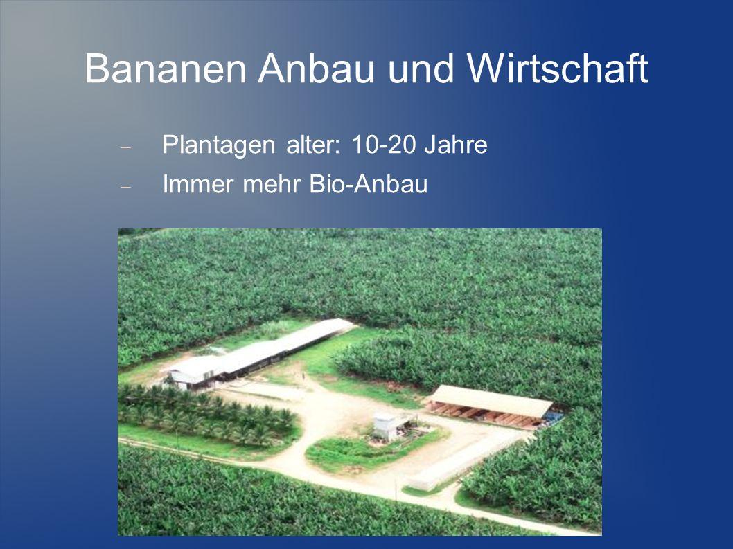 Bananen Anbau und Wirtschaft Plantagen alter: 10-20 Jahre Immer mehr Bio-Anbau