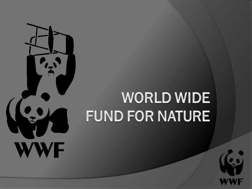 Gliederung 1.Was ist der WWF. 2. Geschichte und Entstehung 3.