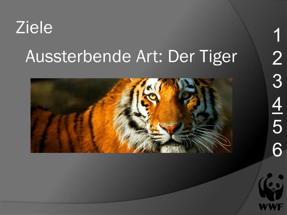 Ziele 123456123456 Aussterbende Art: Der Tiger
