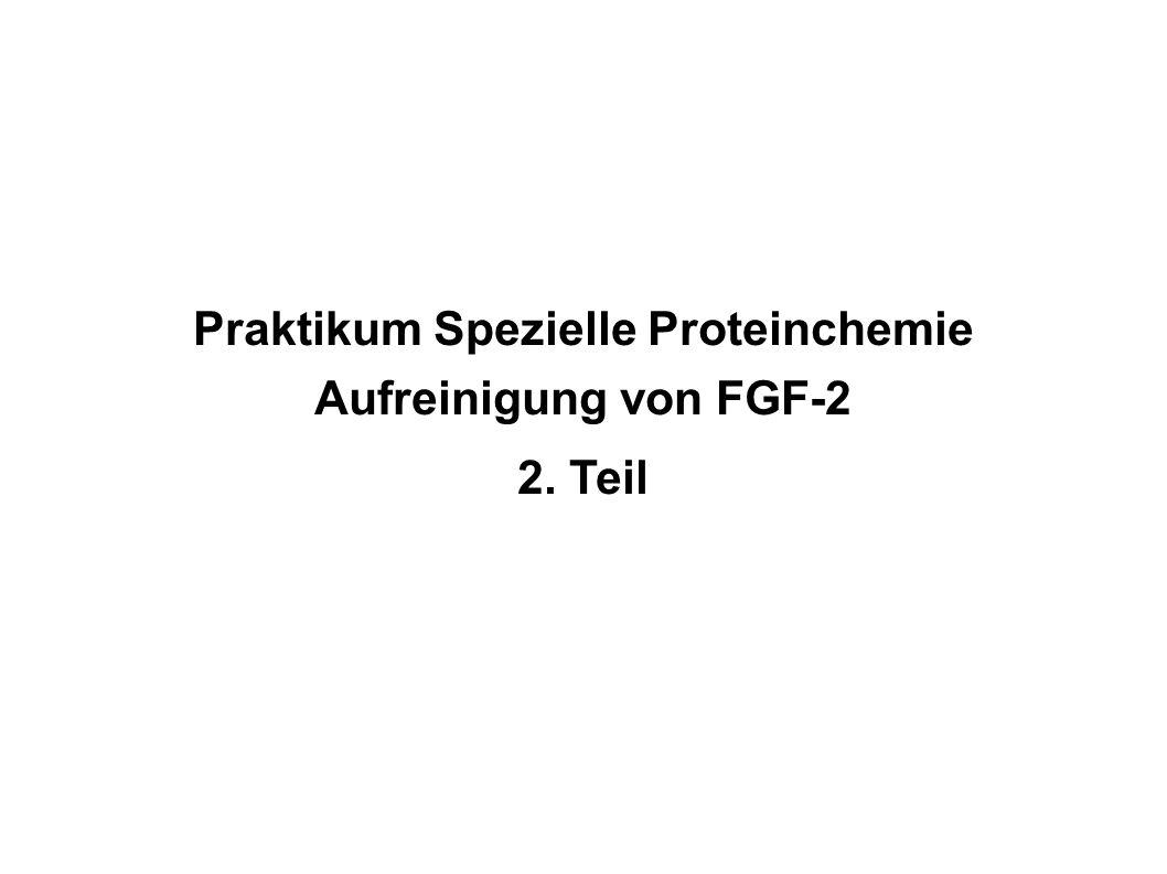 Praktikum Spezielle Proteinchemie Aufreinigung von FGF-2 2. Teil