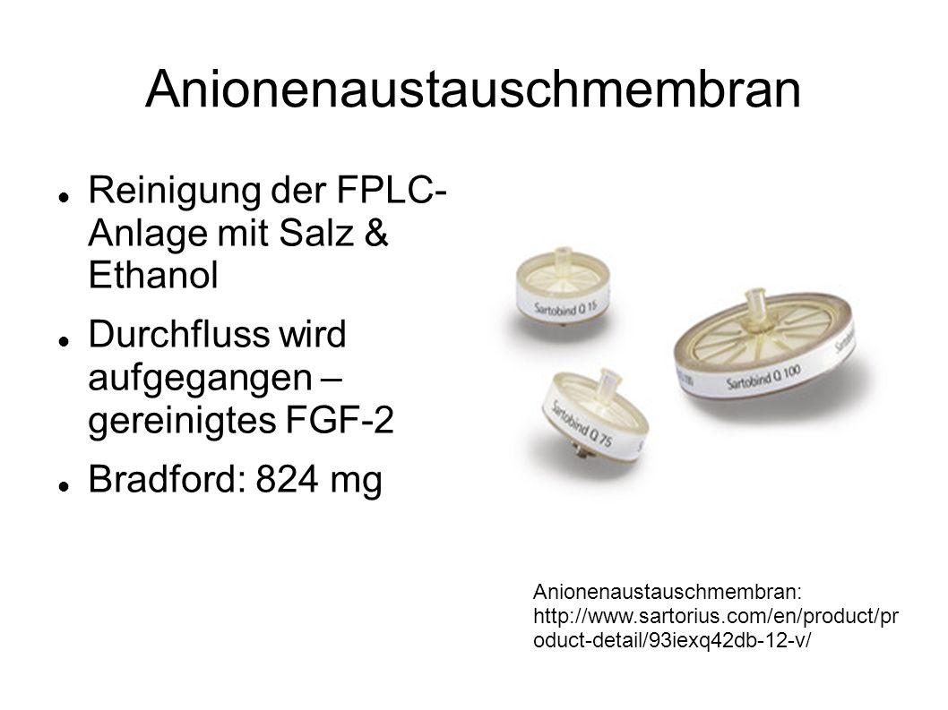 Anionenaustauschmembran Reinigung der FPLC- Anlage mit Salz & Ethanol Durchfluss wird aufgegangen – gereinigtes FGF-2 Bradford: 824 mg Anionenaustausc