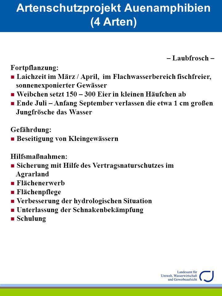 Artenschutzprojekt Auenamphibien (4 Arten) – Laubfrosch – Fortpflanzung: Laichzeit im März / April, im Flachwasserbereich fischfreier, sonnenexponiert