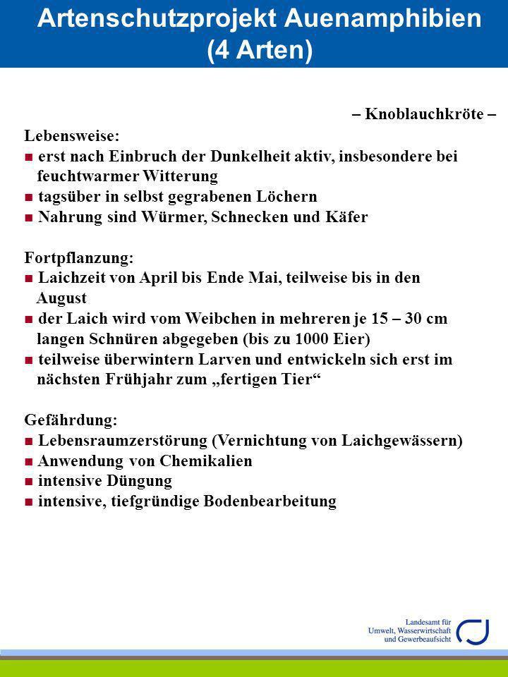 Artenschutzprojekt Auenamphibien (4 Arten) Verbreitungsgebiet in RLP: – Springfrosch – Quelle: Gesellschaft für Naturschutz und Ornithologie Rheinland-Pfalz; Hrsg.