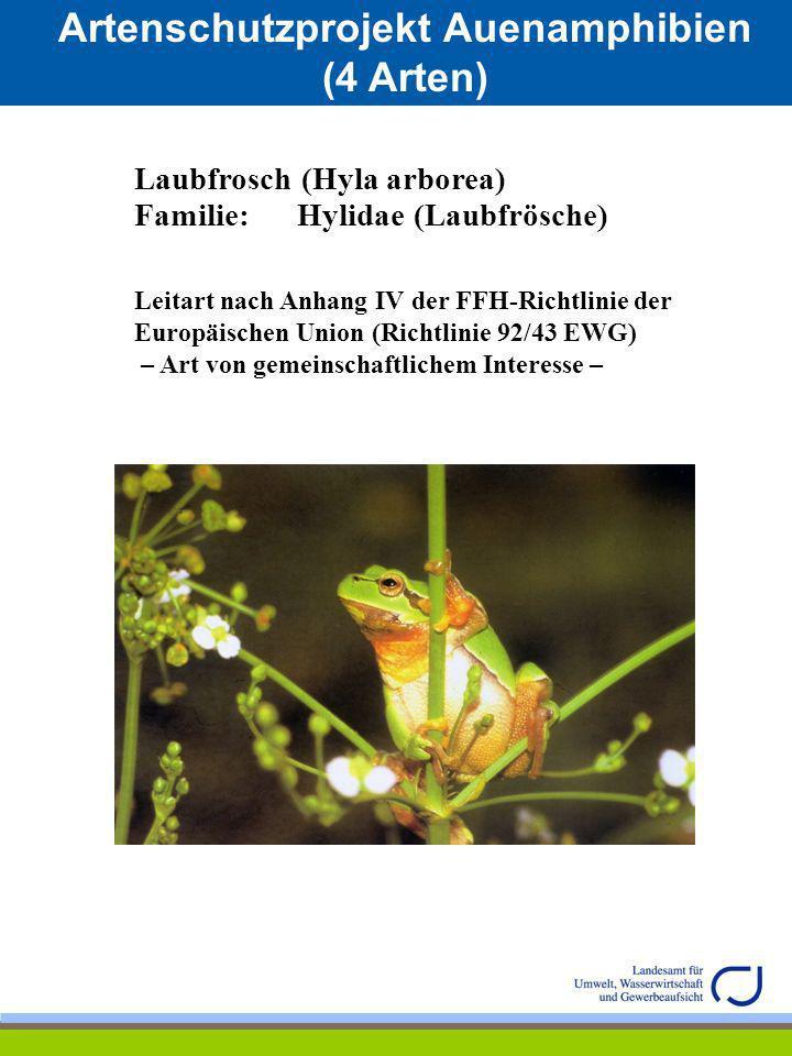 Artenschutzprojekt Auenamphibien (4 Arten) Laubfrosch (Hyla arborea) Familie: Hylidae (Laubfrösche) Leitart nach Anhang IV der FFH-Richtlinie der Euro