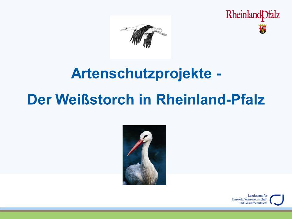 Artenschutzprojekte - Der Weißstorch in Rheinland-Pfalz