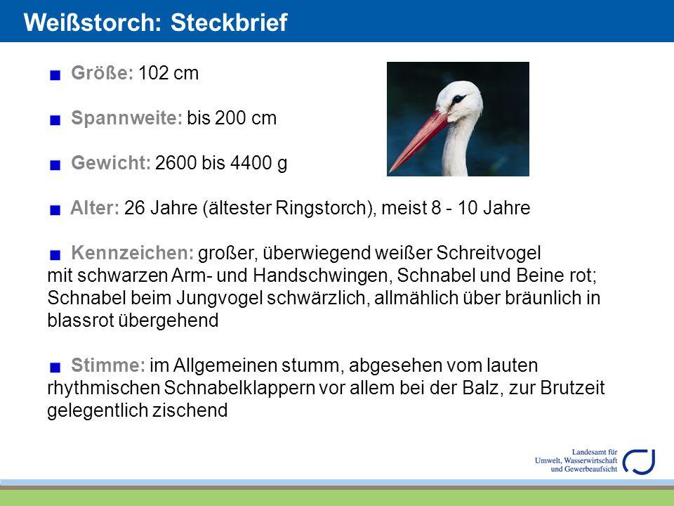 Weißstorch: Steckbrief Größe: 102 cm Spannweite: bis 200 cm Gewicht: 2600 bis 4400 g Alter: 26 Jahre (ältester Ringstorch), meist 8 - 10 Jahre Kennzei