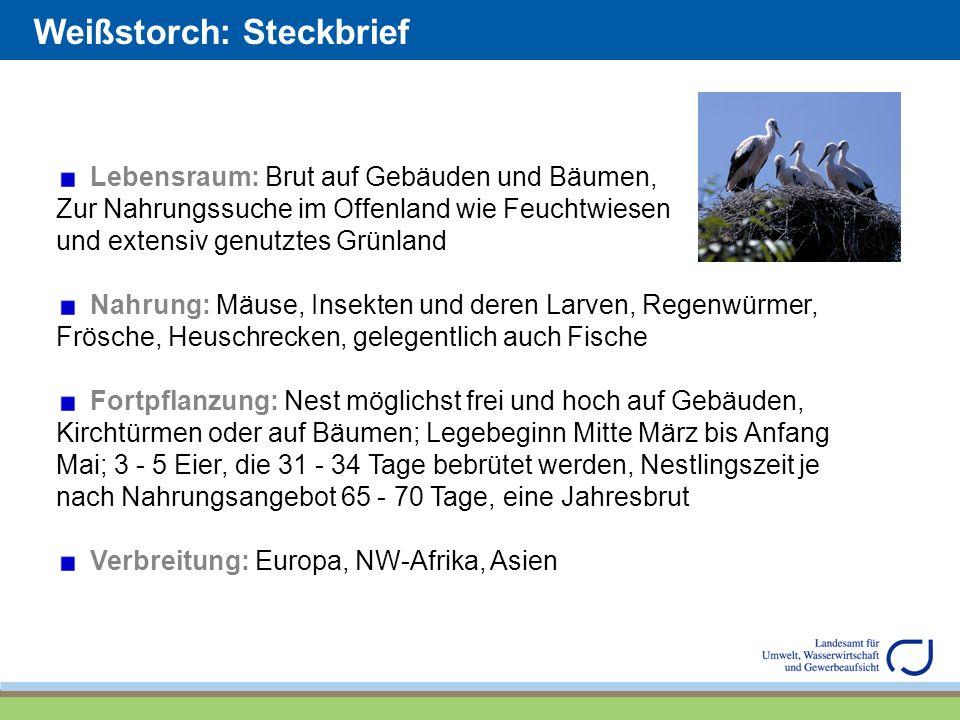 Weißstorch: Steckbrief Lebensraum: Brut auf Gebäuden und Bäumen, Zur Nahrungssuche im Offenland wie Feuchtwiesen und extensiv genutztes Grünland Nahru