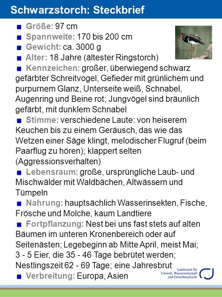 Schwarzstorch: Steckbrief Größe: 97 cm Spannweite: 170 bis 200 cm Gewicht: ca. 3000 g Alter: 18 Jahre (ältester Ringstorch) Kennzeichen: großer, überw
