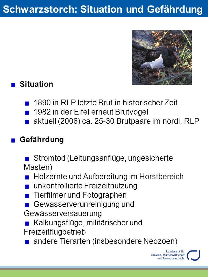 Schwarzstorch: Situation und Gefährdung Situation 1890 in RLP letzte Brut in historischer Zeit 1982 in der Eifel erneut Brutvogel aktuell (2006) ca. 2
