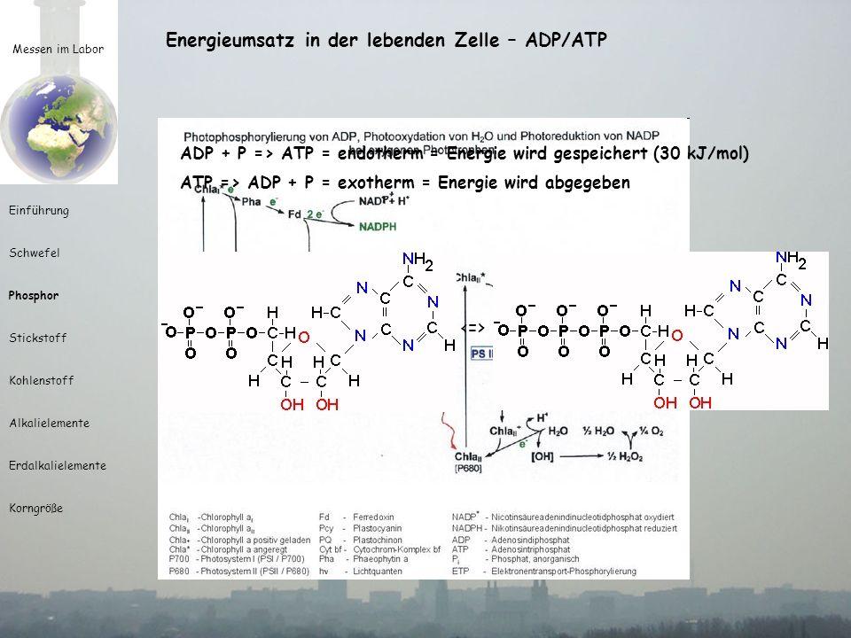 Messen im Labor Einführung Schwefel Phosphor Stickstoff Kohlenstoff Alkalielemente Erdalkalielemente Korngröße Eutrophierung Produktion und Reduktion organischer Substanz Reduktion von CO 2 mittels H 2 O durch Sonnenenergie zu C 6 H 12 O 6 Lichtreaktion: Synthese von ATP H 2 O + NADP + + nADP + nP => (NADP + H + ) + nATP + ½ O 2 Dunkelreaktion: Synthese von Stärke durch mehr Phosphat wird mehr organische Substanz produziert
