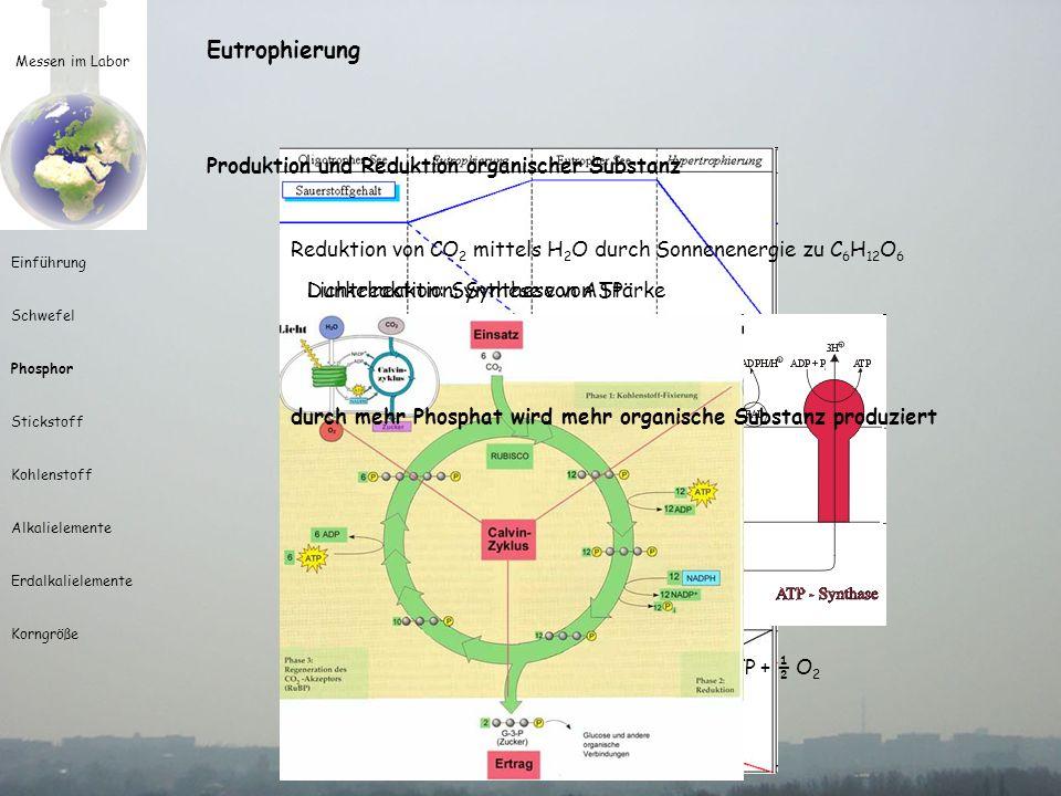 Messen im Labor Einführung Schwefel Phosphor Stickstoff Kohlenstoff Alkalielemente Erdalkalielemente Korngröße Eutrophierung Produktion und Reduktion organischer Substanz Oxydation organischer Substanz zu CO 2 Sauerstoffkonzentration im See ist abhängig von: - der Sauerstoffproduktion der Pflanzen im See - dem Partialdruck des Sauerstoffes in der Luft - und der Sauerstoffzehrung durch Oxydation - im schlimmsten Fall wird Sauerstoff von Sulfaten genommen C 6 H 12 O 6 + 6 O 2 => 6 CO 2 + 6 H 2 O