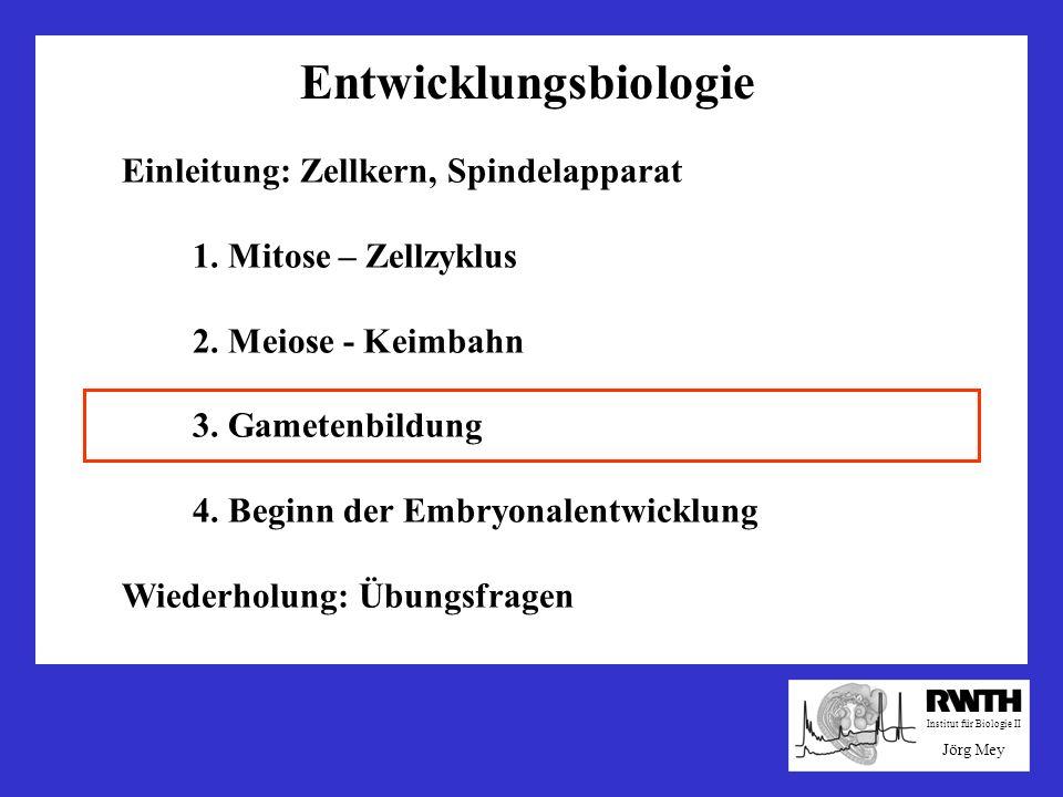 Entwicklungsbiologie Einleitung: Zellkern, Spindelapparat 1. Mitose – Zellzyklus 2. Meiose - Keimbahn 3. Gametenbildung 4. Beginn der Embryonalentwick