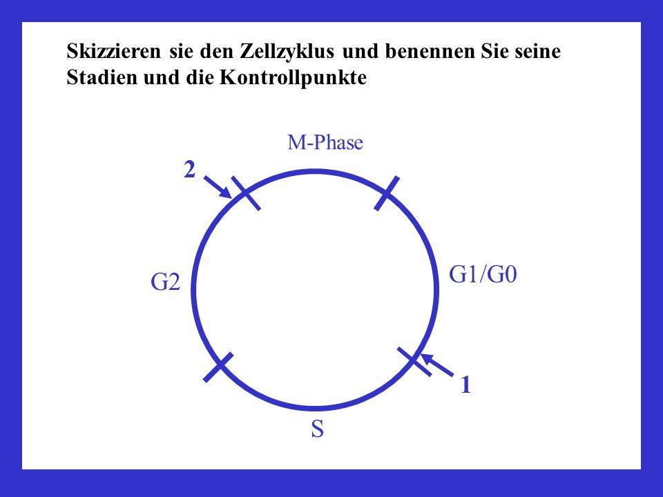 Skizzieren sie den Zellzyklus und benennen Sie seine Stadien und die Kontrollpunkte 1 2 S M-Phase G1/G0 G2