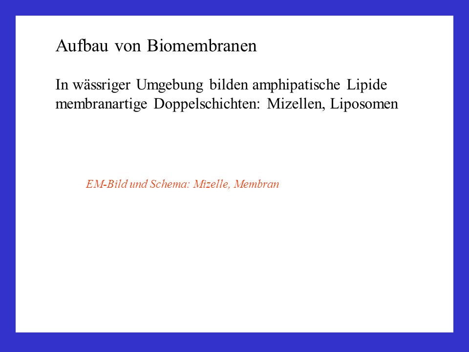Aufbau von Biomembranen In wässriger Umgebung bilden amphipatische Lipide membranartige Doppelschichten: Mizellen, Liposomen EM-Bild und Schema: Mizel