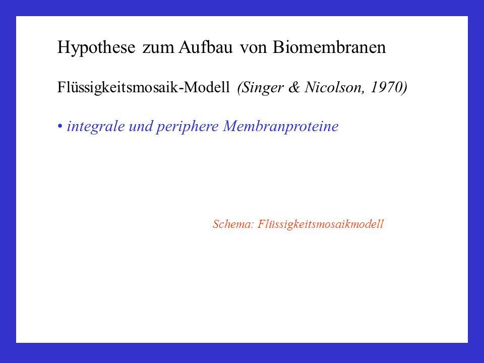 Schema: Flüssigkeitsmosaikmodell Hypothese zum Aufbau von Biomembranen Flüssigkeitsmosaik-Modell (Singer & Nicolson, 1970) integrale und periphere Mem