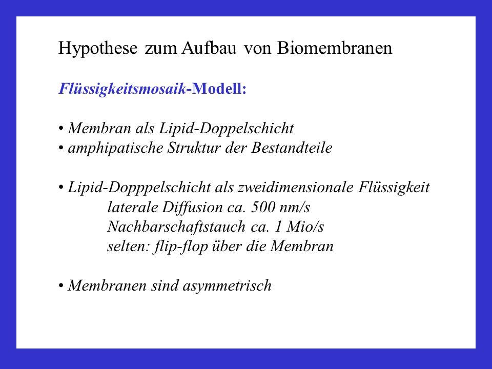 Hypothese zum Aufbau von Biomembranen Flüssigkeitsmosaik-Modell: Membran als Lipid-Doppelschicht amphipatische Struktur der Bestandteile Lipid-Dopppel