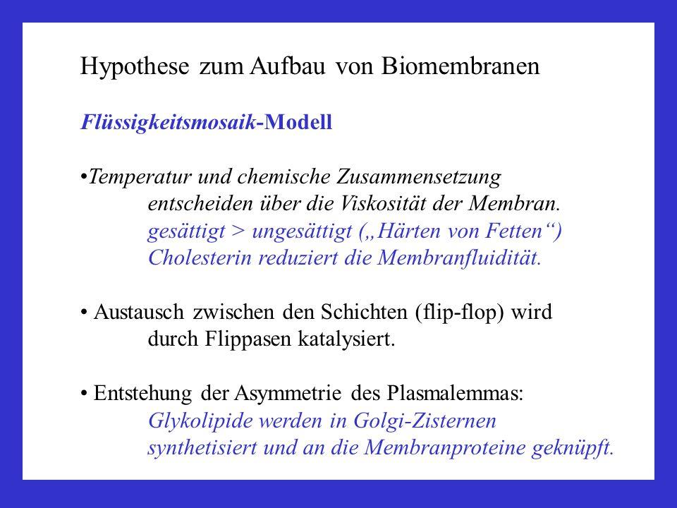 Hypothese zum Aufbau von Biomembranen Flüssigkeitsmosaik-Modell Temperatur und chemische Zusammensetzung entscheiden über die Viskosität der Membran.