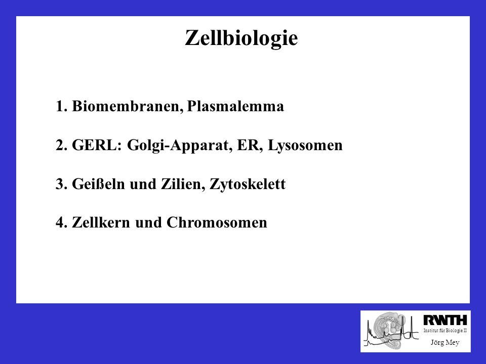 Golgi-Apparat Membransystem: ER – Golgi - Lysosomen Golgi-Zisternen, Dictyosomen, Transportvesikel Funktionen des Golgi: Transport und Verteilung in der Zelle: lösliche Proteine, Membransegmente, Endo-/Exozytose-Vesikel Modifikation und Sortierung von Proteinen: Glykosylierung, Modifikation der Oligosaccharidketten Produktion von Lysosomen: Verdauung und intrazellulärer Abbau (zweiter Weg: Proteasomen)