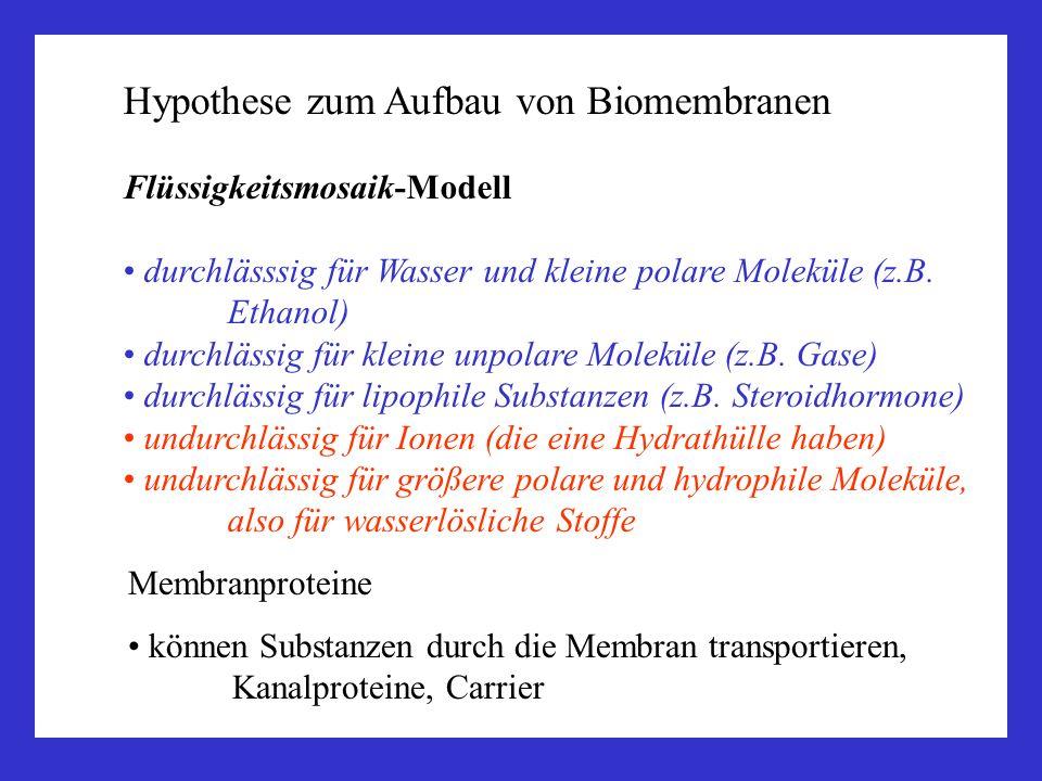 Hypothese zum Aufbau von Biomembranen Flüssigkeitsmosaik-Modell durchlässsig für Wasser und kleine polare Moleküle (z.B. Ethanol) durchlässig für klei