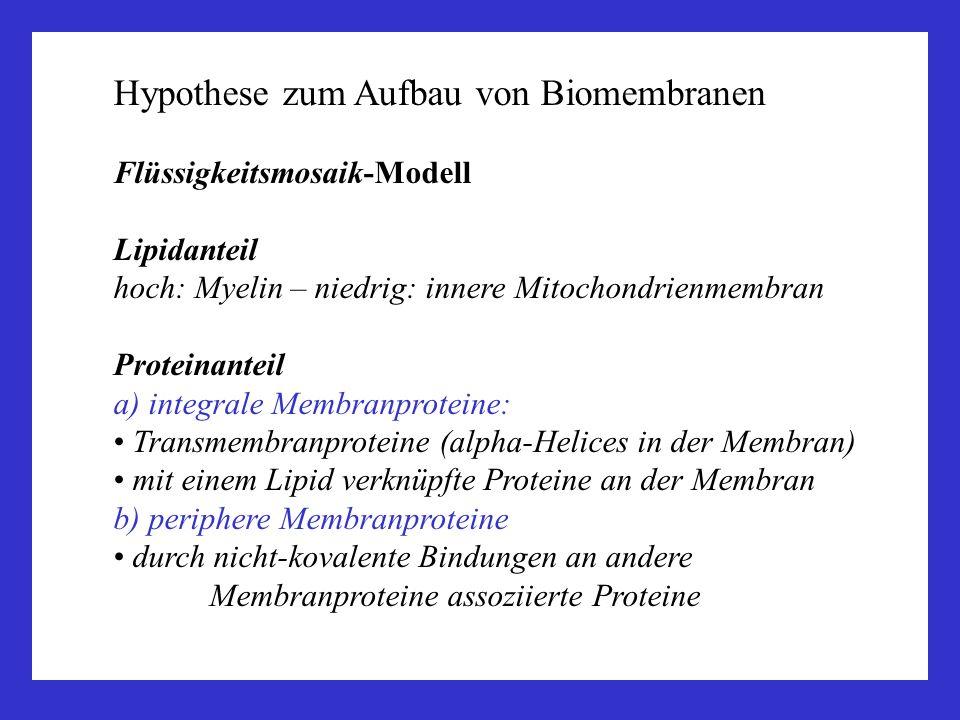 Hypothese zum Aufbau von Biomembranen Flüssigkeitsmosaik-Modell Lipidanteil hoch: Myelin – niedrig: innere Mitochondrienmembran Proteinanteil a) integ