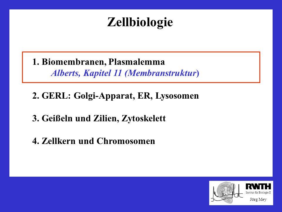 Zellbiologie 1. Biomembranen, Plasmalemma Alberts, Kapitel 11 (Membranstruktur) 2. GERL: Golgi-Apparat, ER, Lysosomen 3. Geißeln und Zilien, Zytoskele