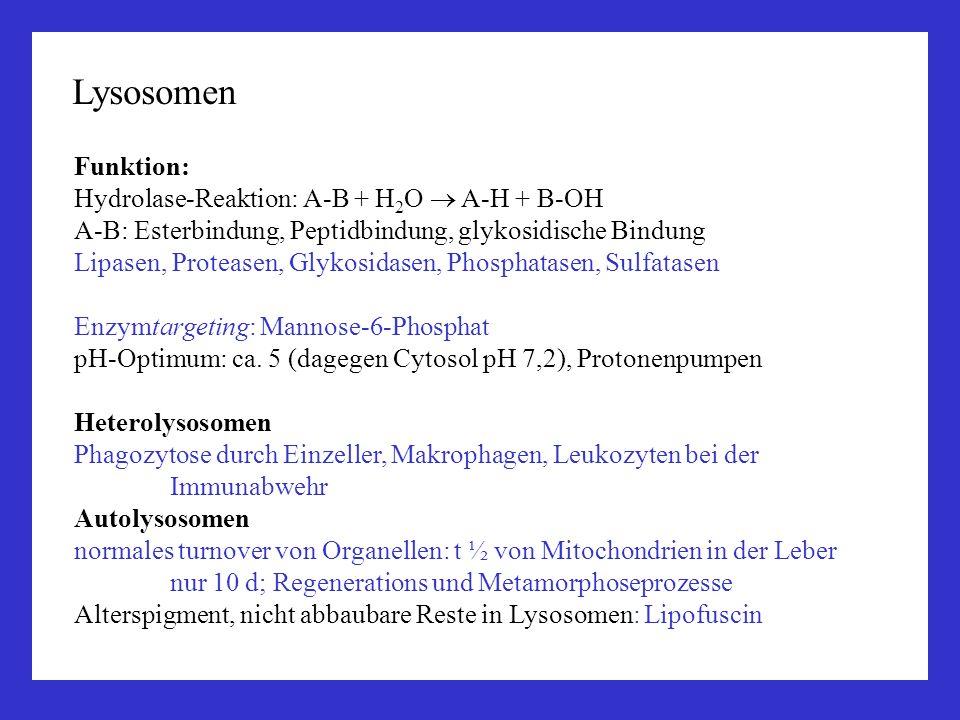 Funktion: Hydrolase-Reaktion: A-B + H 2 O A-H + B-OH A-B: Esterbindung, Peptidbindung, glykosidische Bindung Lipasen, Proteasen, Glykosidasen, Phospha