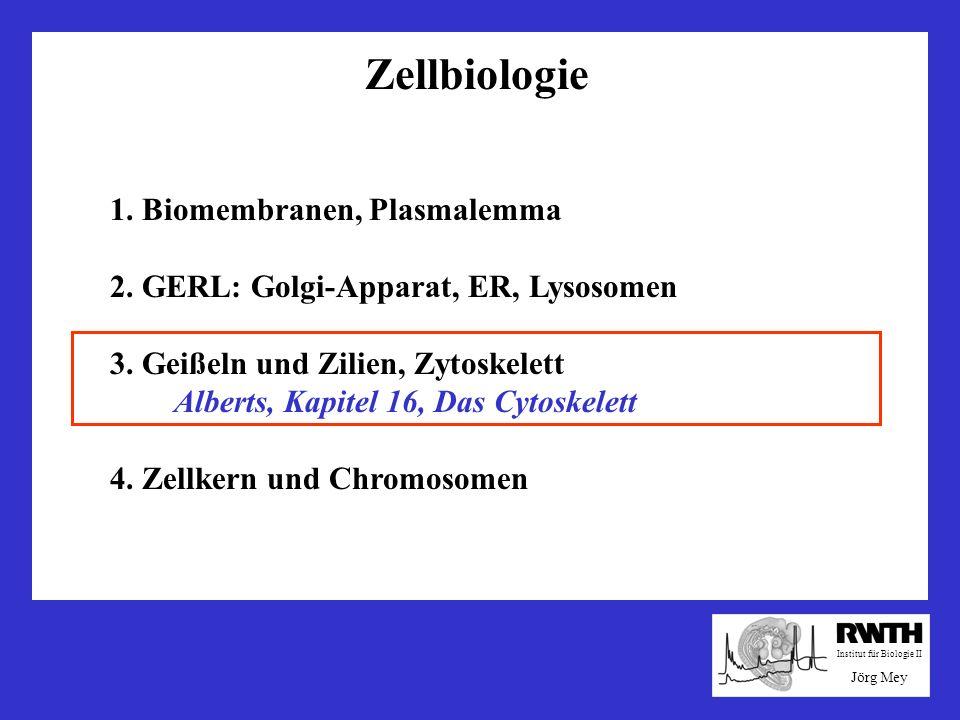 Zellbiologie 1. Biomembranen, Plasmalemma 2. GERL: Golgi-Apparat, ER, Lysosomen 3. Geißeln und Zilien, Zytoskelett Alberts, Kapitel 16, Das Cytoskelet